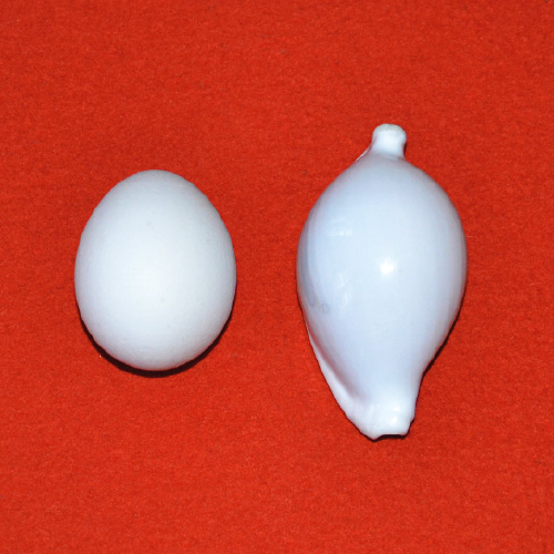 egg and shell